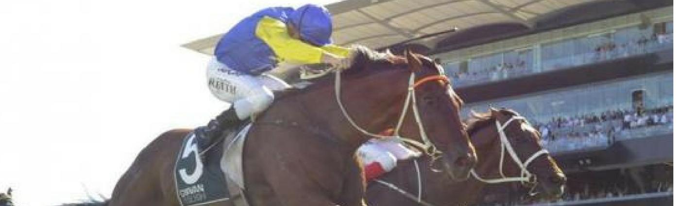 Le Romain Race Horse