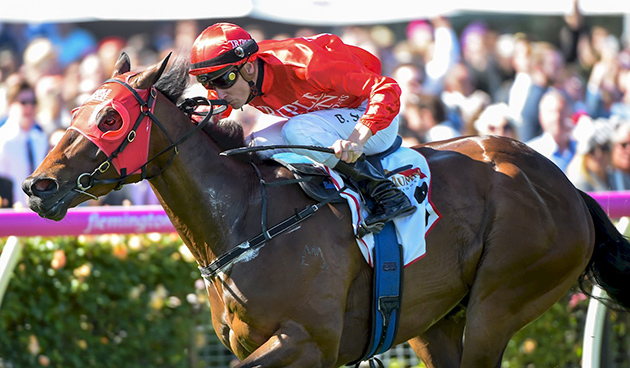 Redzel top rater